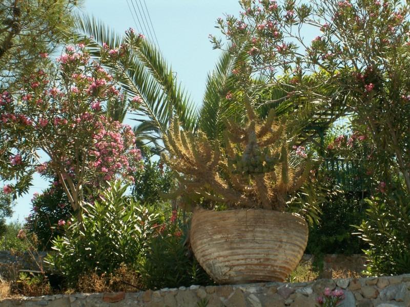 садоводство в греции