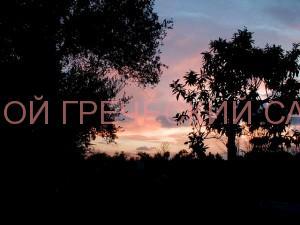 греческий сад на закате солнца фото