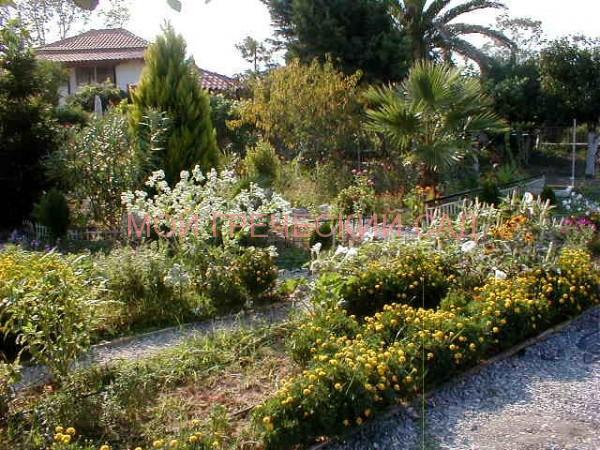 Так выглядел сад в первое лето