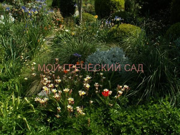 Греция Ранней весной цветут луковичные