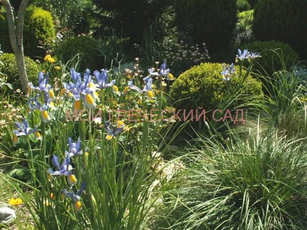 растения для греческого сада фото