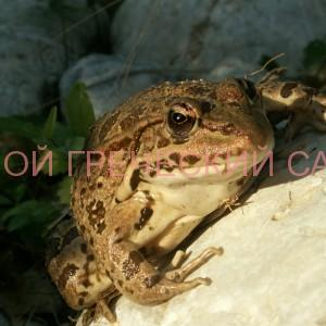 Фото лягушки в саду