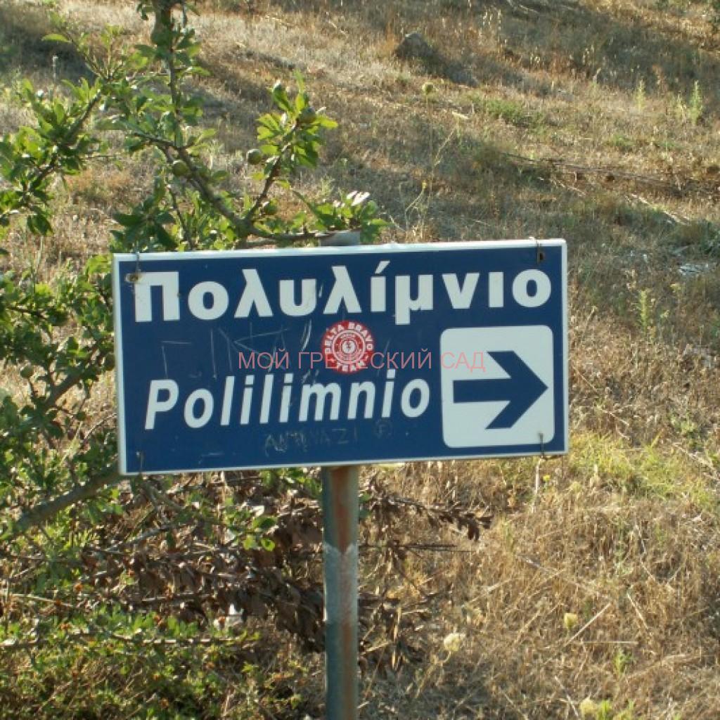 Указатель Полилимнио фото