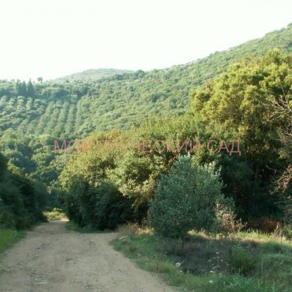 дорога в Полилимнио фото