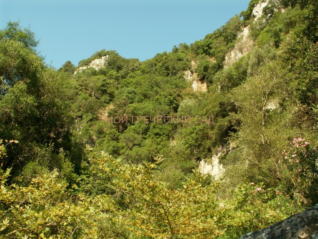 Ущелье Полилимнио фото
