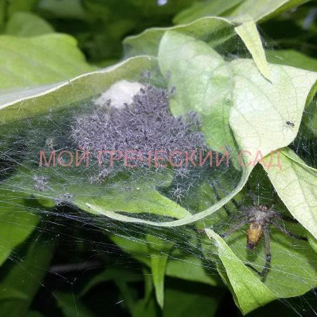 польза от пауков