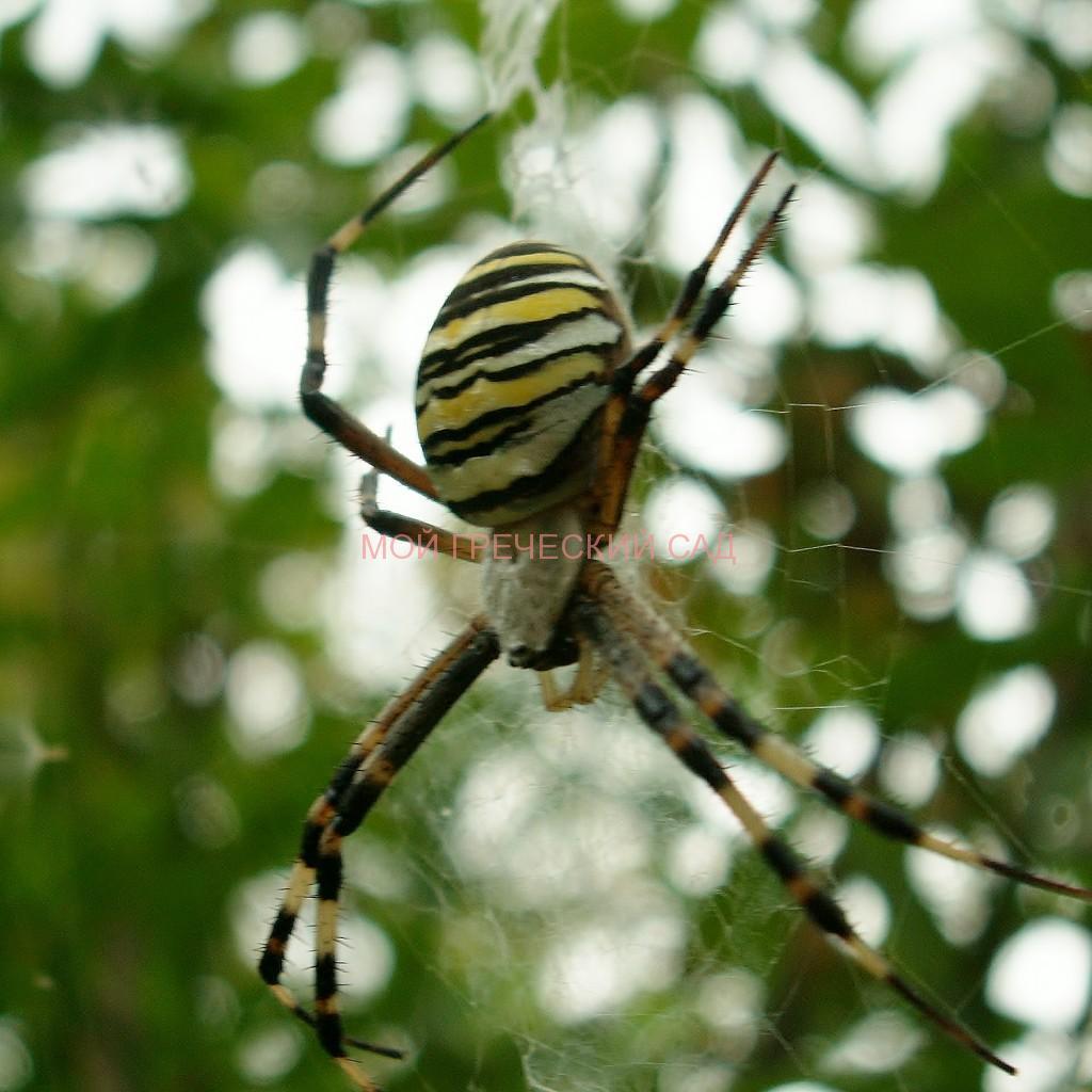 Польза пауков в саду фото