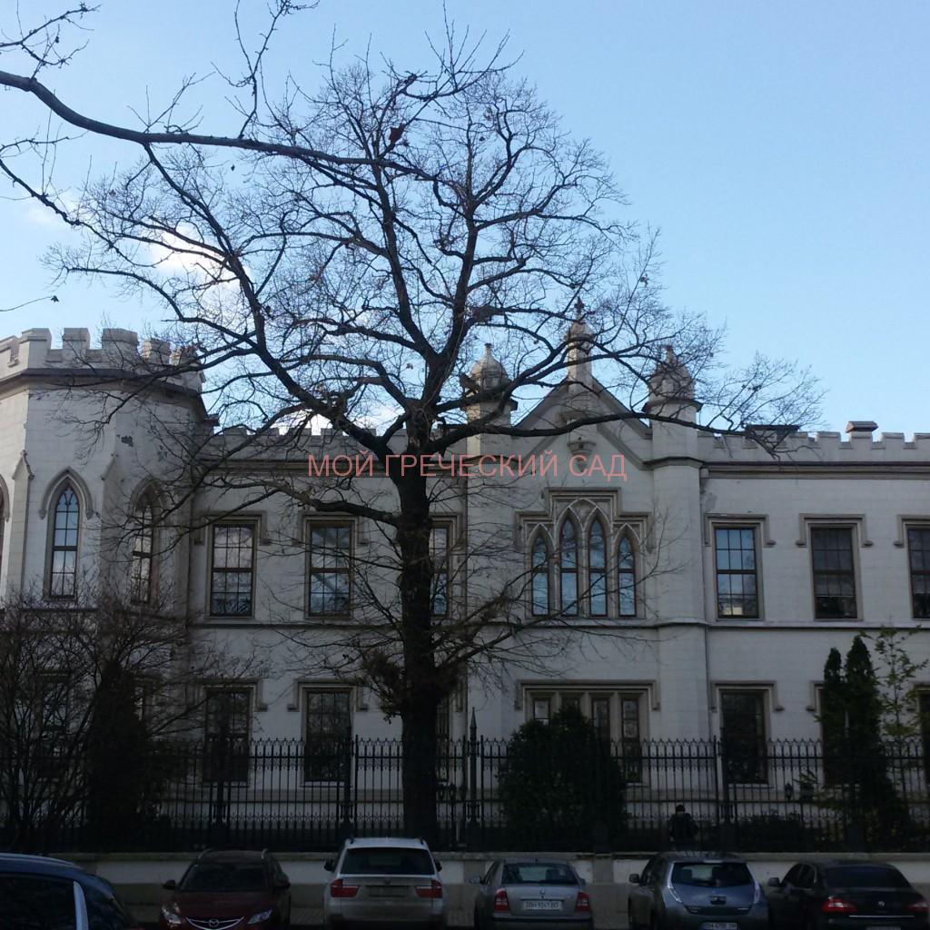 Шахский дворец фото