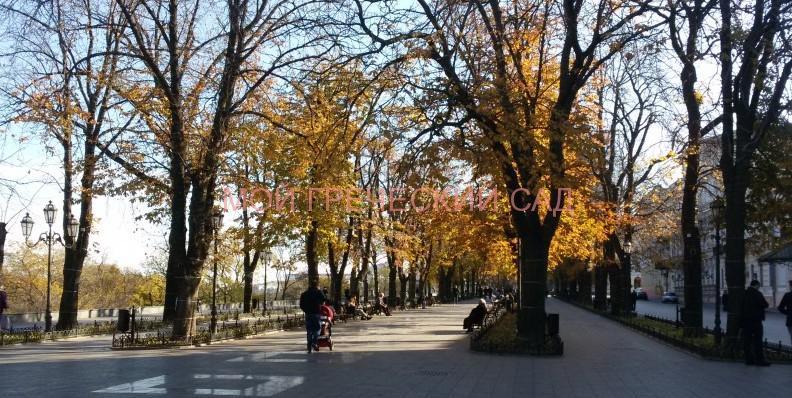 Приморский бульвар в Одессе фото