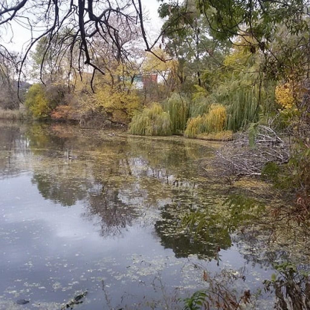 пруд в Одессе фото