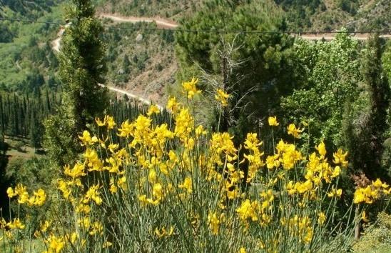 растения Греции