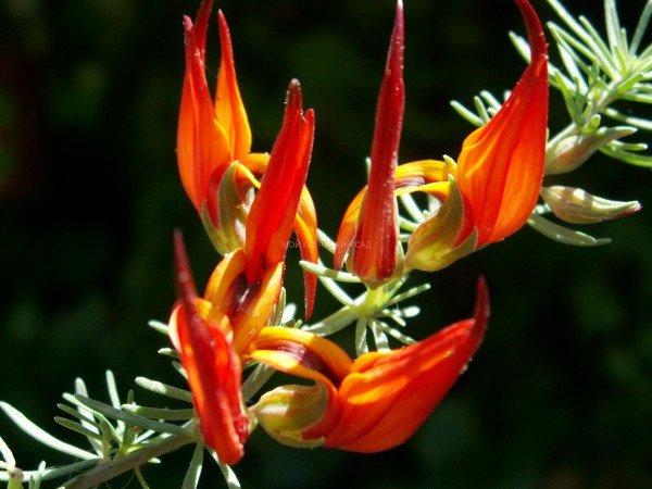 редкие комнатные растения