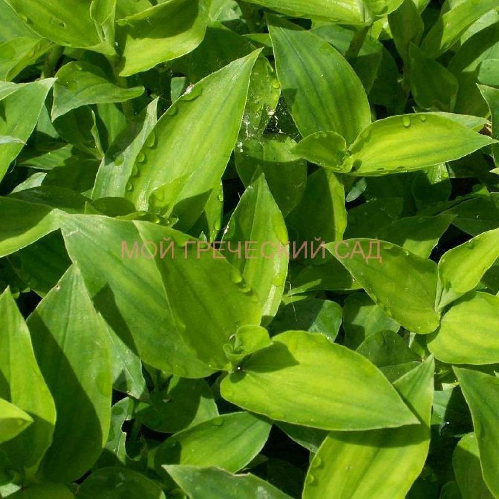 самые теневыносливые растения фото