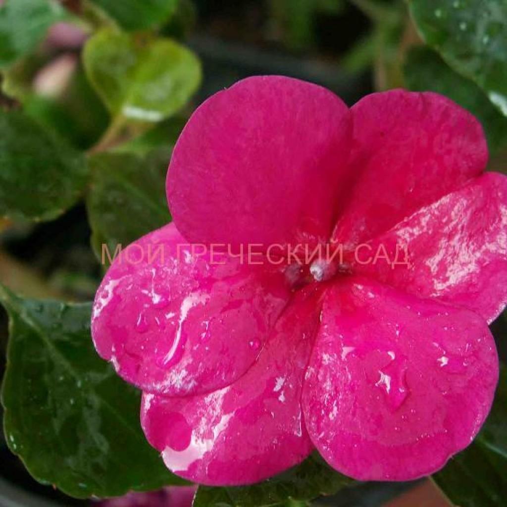 красивоцветущие ненелюбивые растения