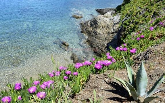 растительность Греции фото