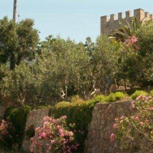олеандры, оливы в Греции фото