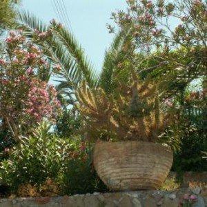 сад в Греции фото