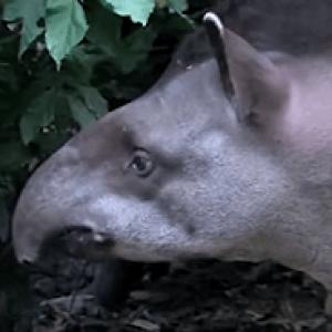 реликтовые животные фото и примеры
