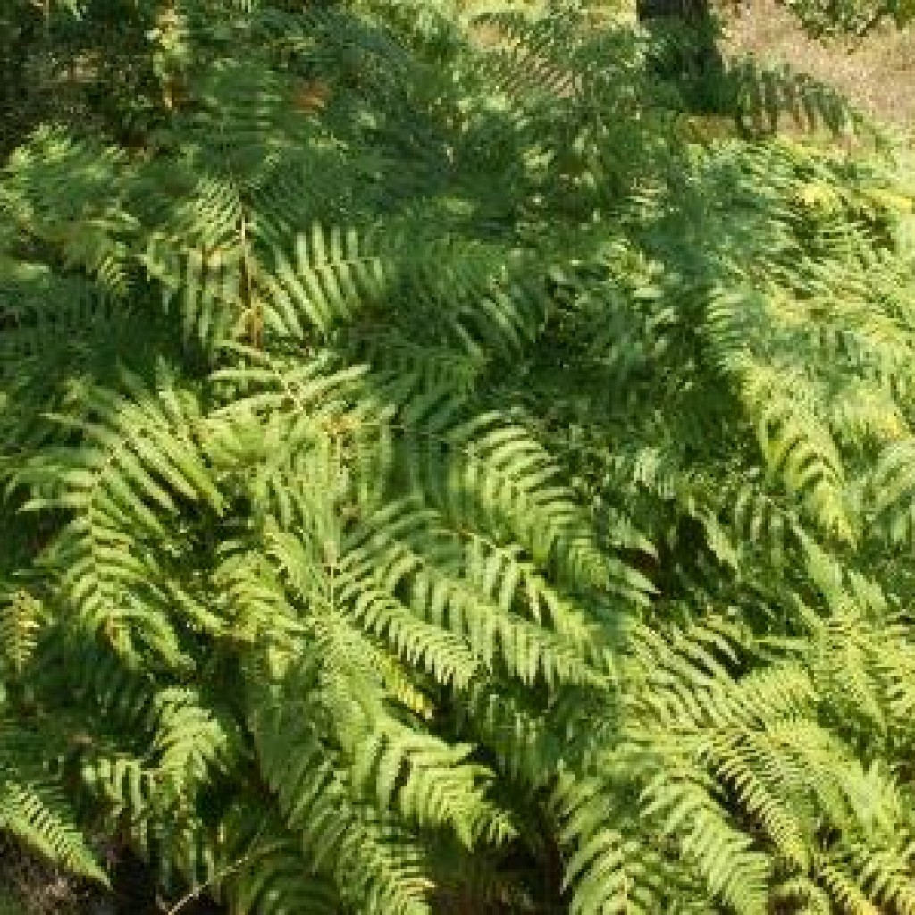 растения Греции фото